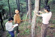 Spotlight on forest monitoring. Photo credit, UN