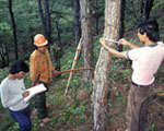 Government trainees and forest workers make a tree inventory, Philippines