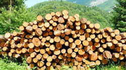 Woody biomass – the fuel of choice for Serbia