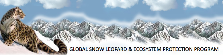 global-snow-leopard
