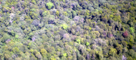 UNEP Announces Watersheds Project in Kenyan Forest