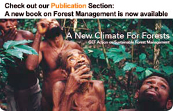 GEF Releases Review of its Work on Sustainable Forest Management