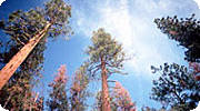 Forests store CO2 helping alleviate climate change