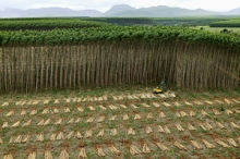 Industrial roundwood production from planted forests, Brazil