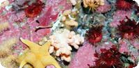 WMO International Polar Day Focuses on Polar Oceans